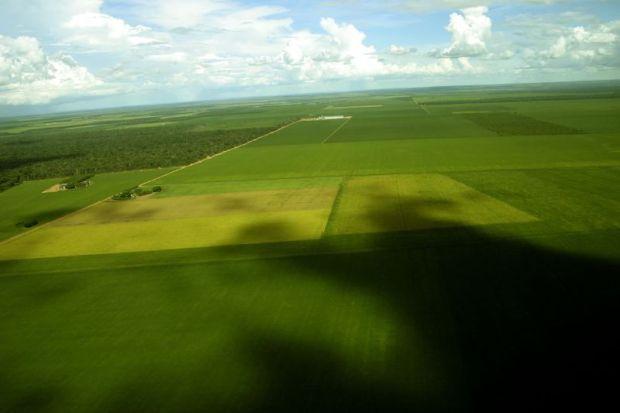 brazil soy plantation mato grosso flickr leonardo f freitas