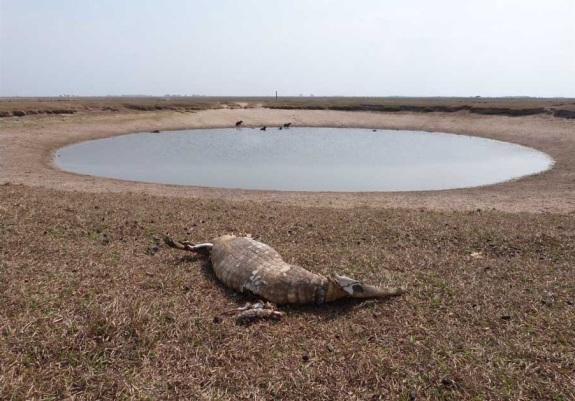 The Casanare region of Colombia was hit by a devastating drought earlier this year, resulting in the deaths of tens of thousands of cattle and other animals. Photo courtesy of El Tiempo (Colombia).