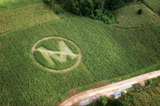 gm anti monsanto crop circle philippines ap vanity fair