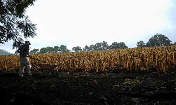 guatemala drought maize infolatam
