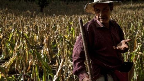 guatemala farmer drought efe telesur