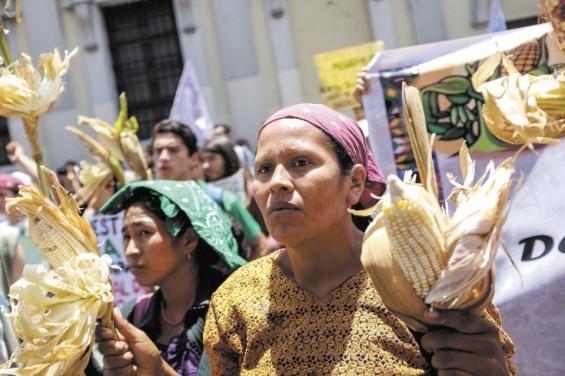 guatemala protest ley monsanto hoy.ni