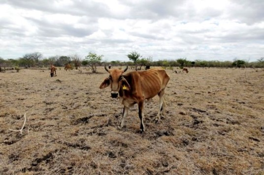 nicaragua drought reuters oswaldo rivas