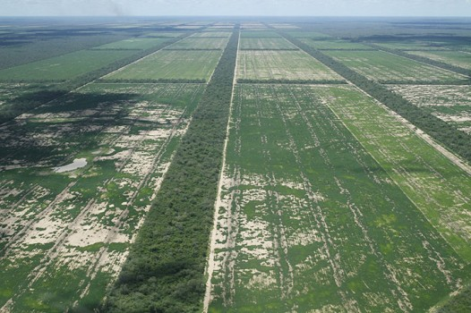 paraguay chaco deforestation soy guardian friends of the earth